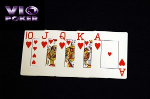 royal flush capsa susun idn poker online